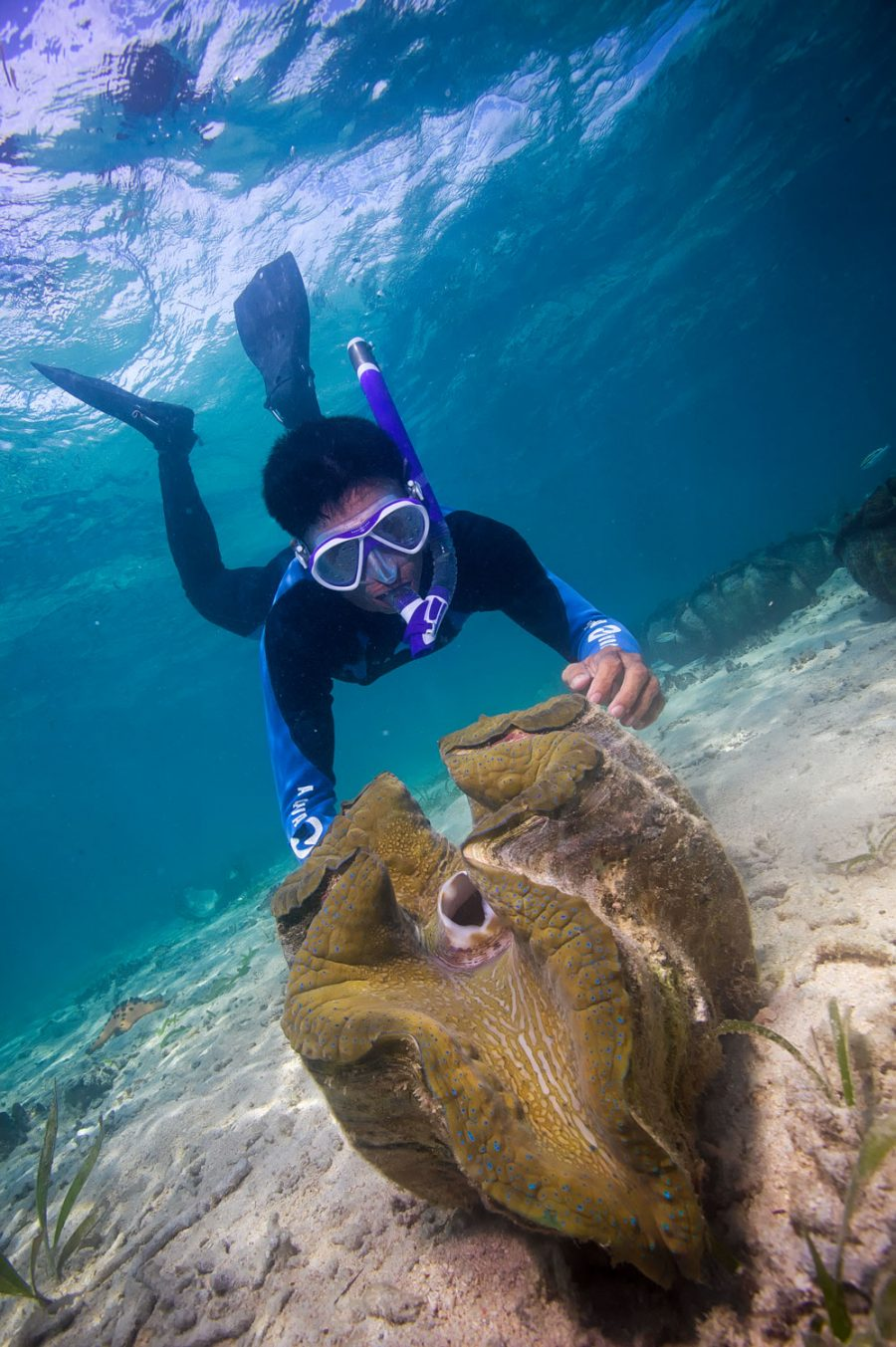 researcher with giant clam under water
