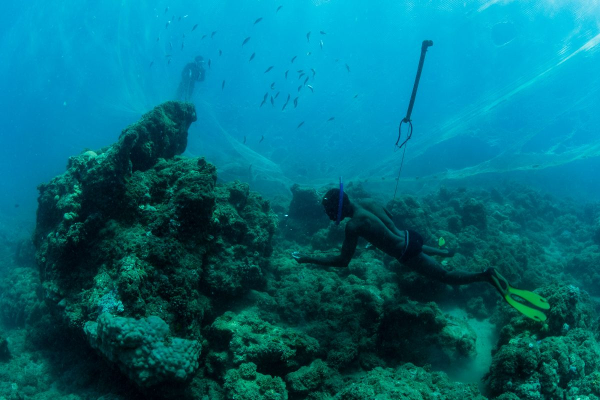 A Vezo fisherman pulls his spear from a degraded coral reef