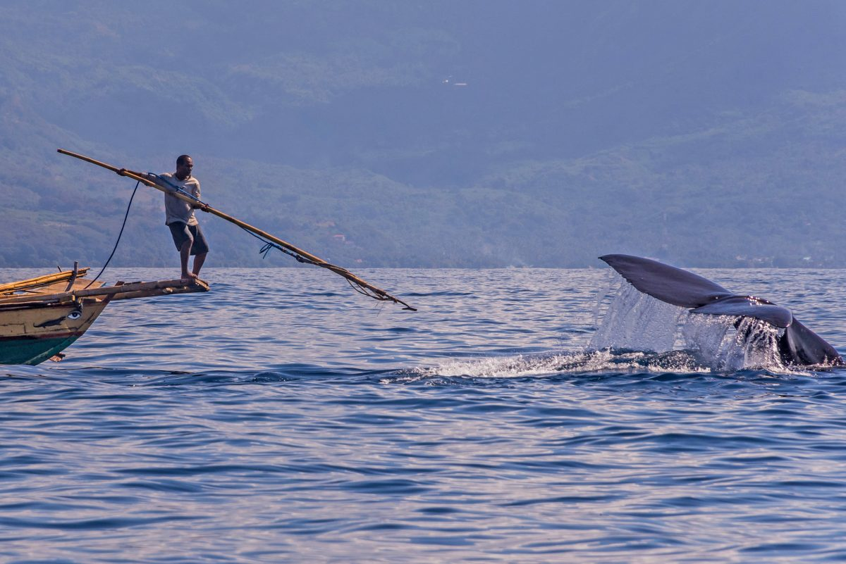 a young indonesian hunts a whale from a boat