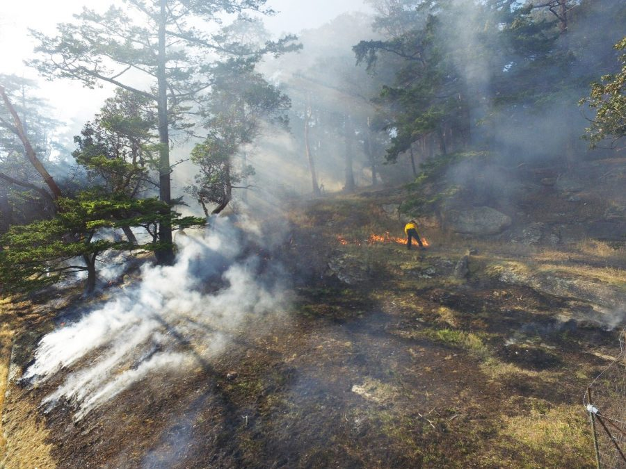 a prescribed burn in a Farry oak ecosystem on Tumbo Island