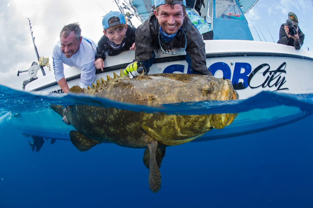 Anglers prepare to release a goliath grouper after catching it off Palm Beach County, Florida.