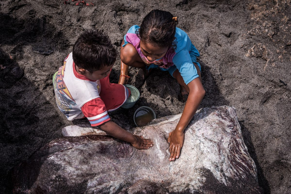 children press oil out of sperm whale blubber