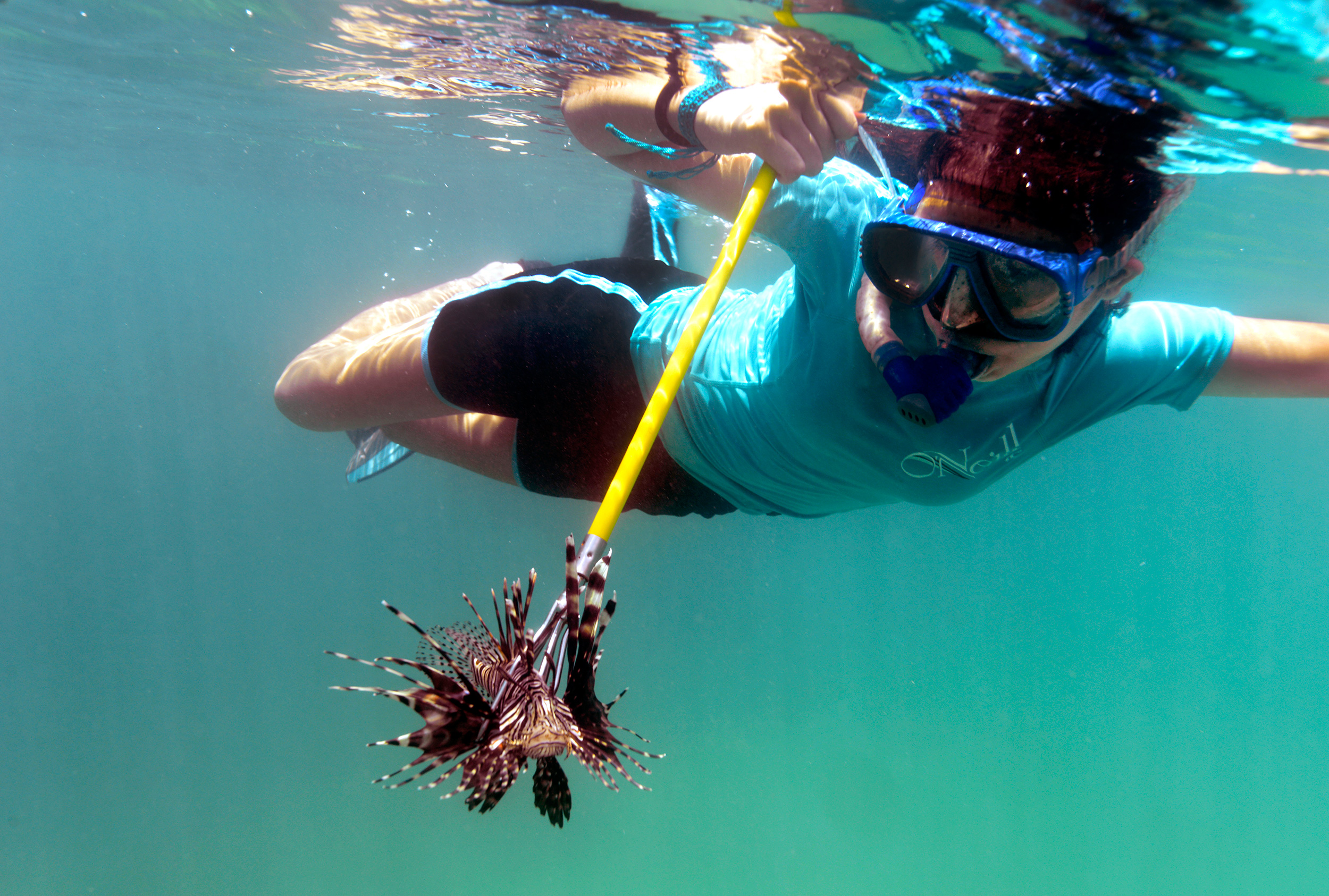 Counterattack how one community fends off an unwanted fish andrs hernndezs daughter romi 15 floats to the surface with a speared lionfish she received scuba certification through apacs which offers free dive 1betcityfo Images