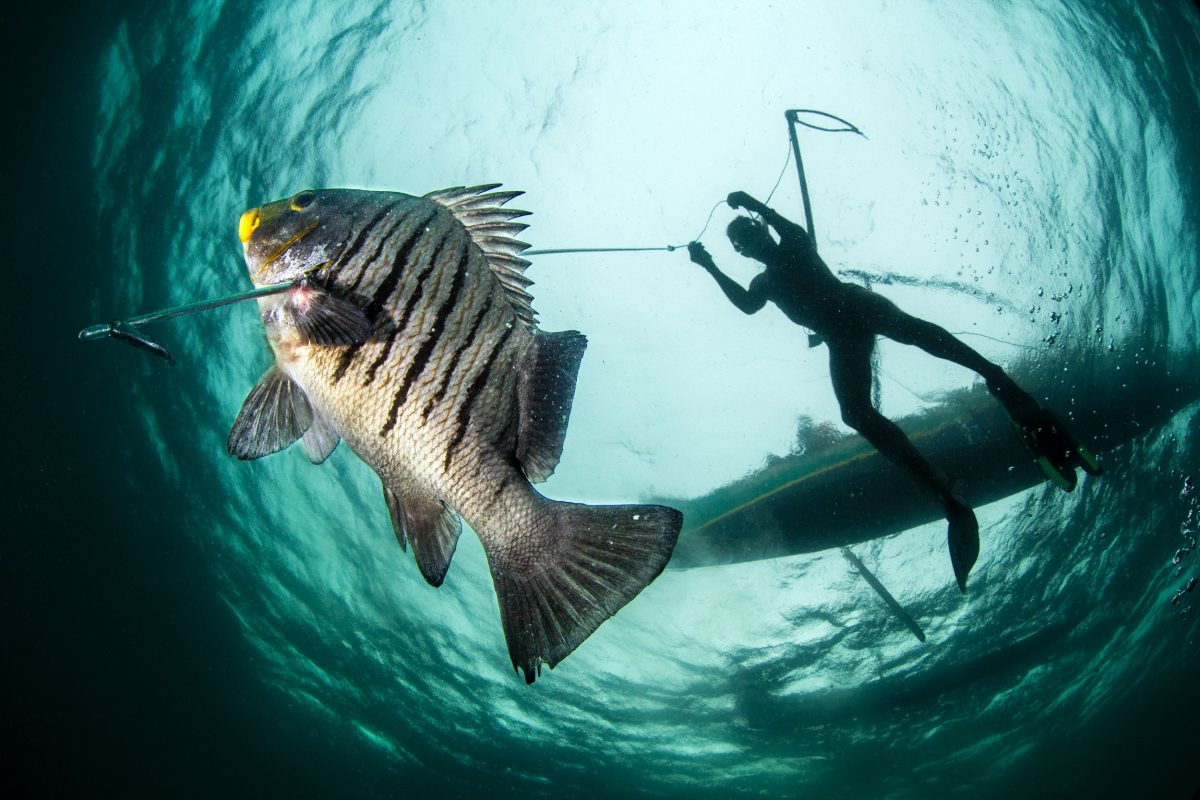 Vezo fisher spearfishing in southwestern Madagascar