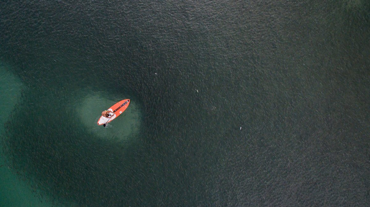 drone shot of a standup paddleboarder surrounded by striped mullet