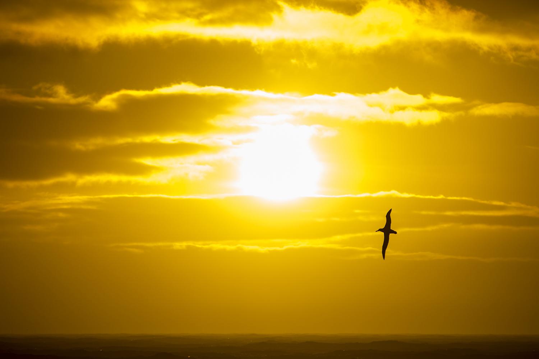 Whither Seabirds?   Hakai Magazine