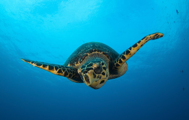 Talkin' Turtles: the Politics of Sea Turtle Conservation | Hakai Magazine