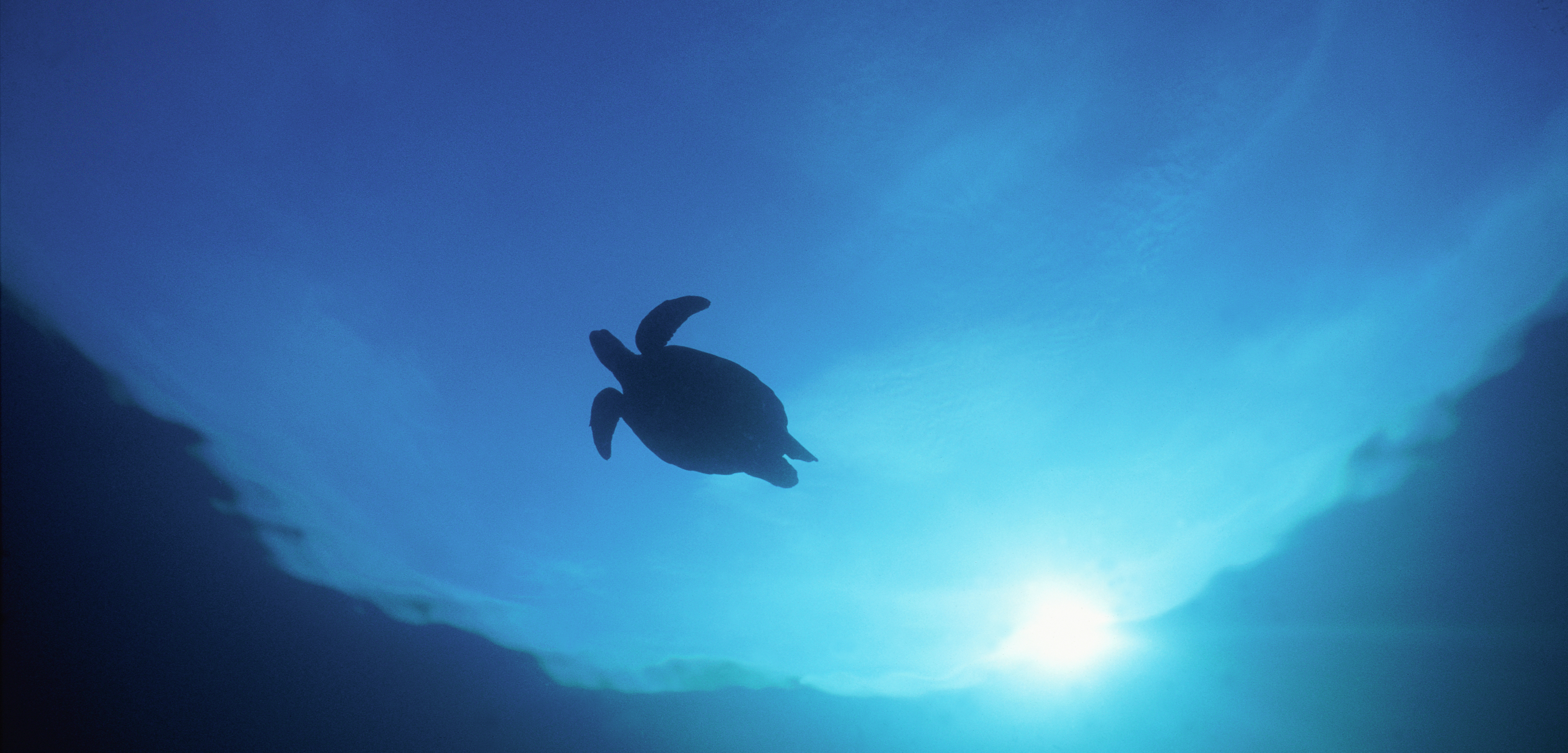 This turtle's favorite movie is the 1993 classic Homeward Bound. Photo by Gary Bell/Corbis