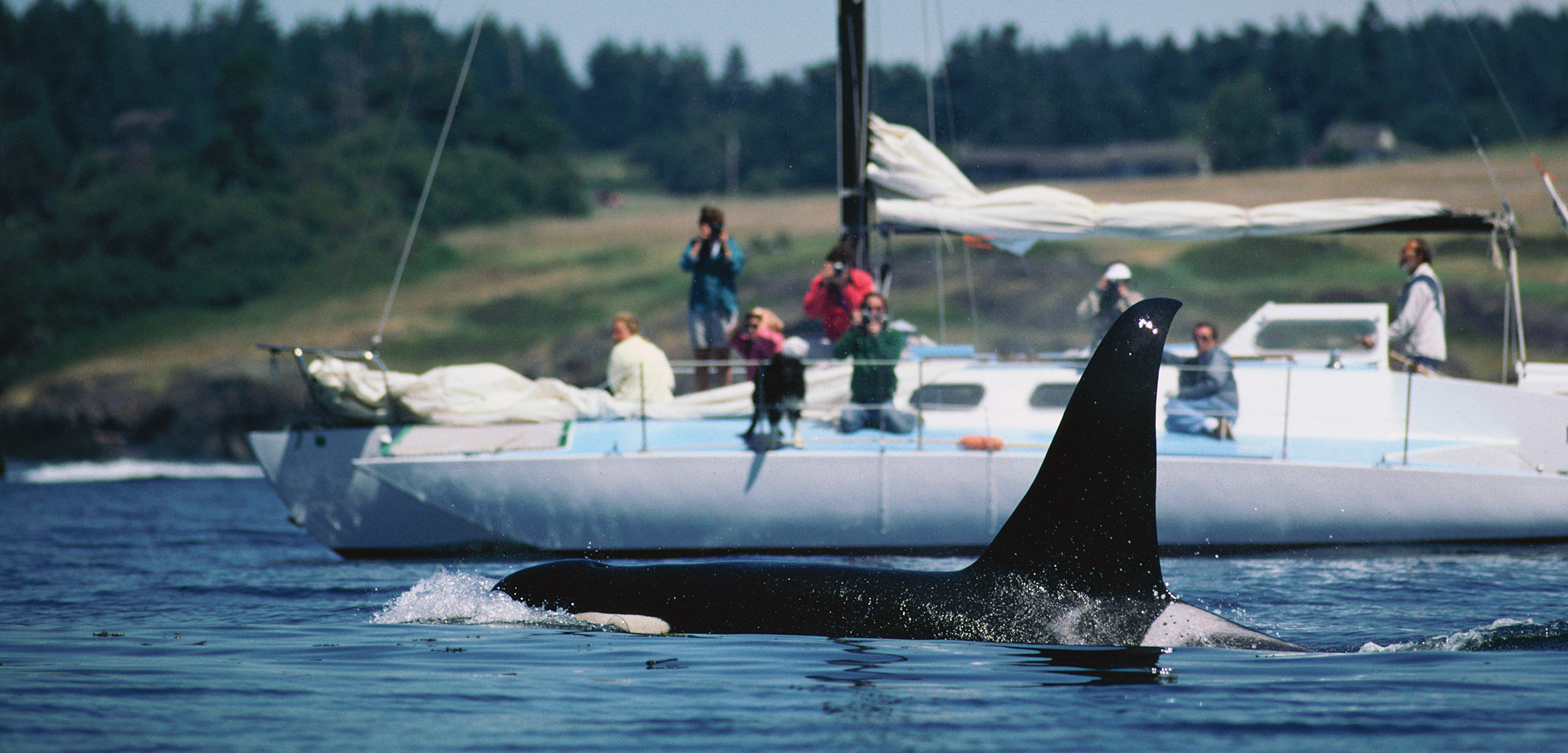 A resident killer whale swims in the waters off Washington State. Photo by Hiroya Minakuchi/Minden Pictures/Corbis