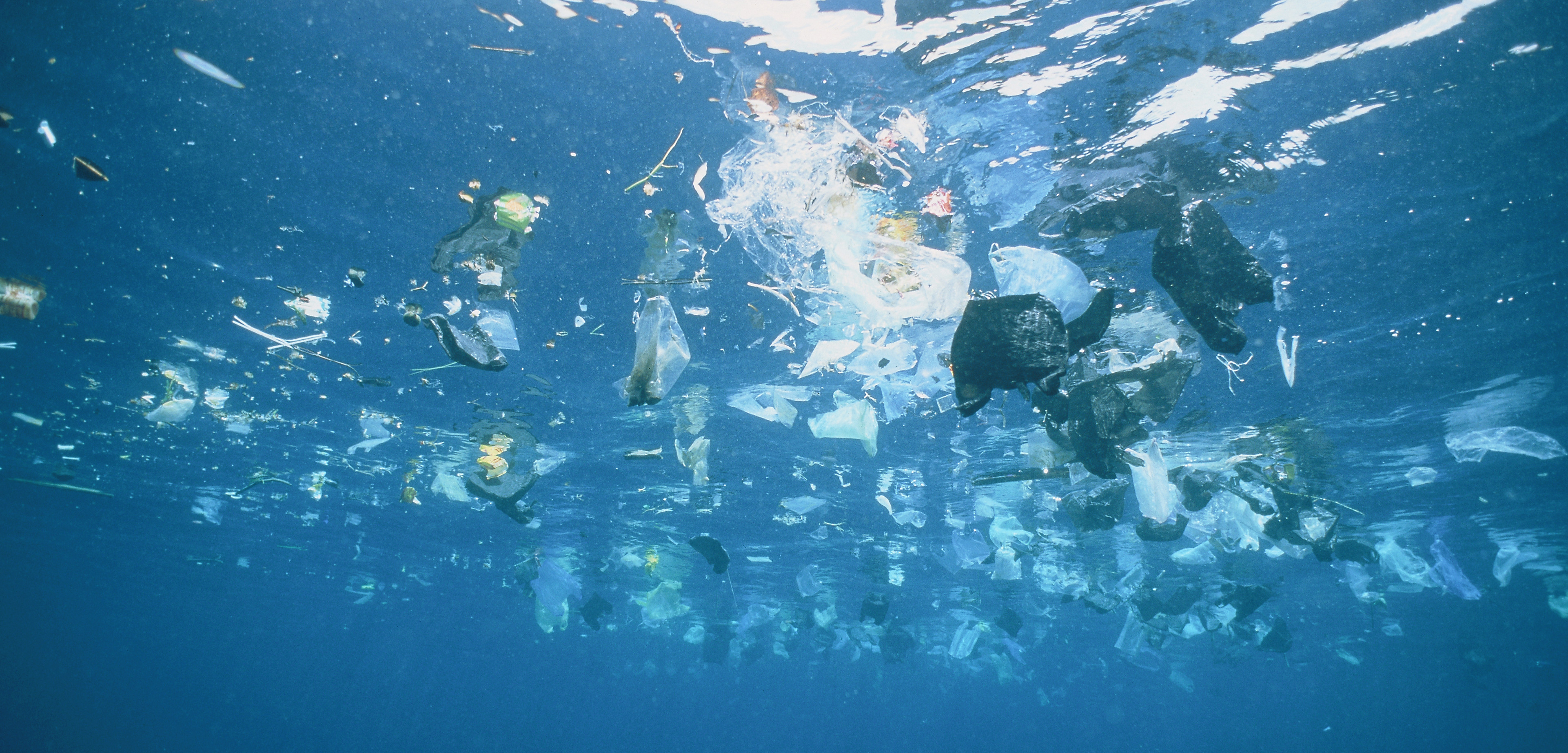 Surface-dwelling fish are more likely to be contaminated by plastic than bottom-dwellers. Photo by Gary Bell/Corbis