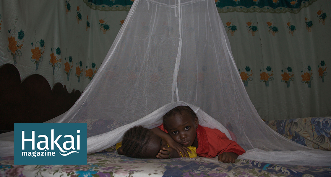 New Research Assuages Some Worries About Mosquito Net Fishing | Hakai Magazine