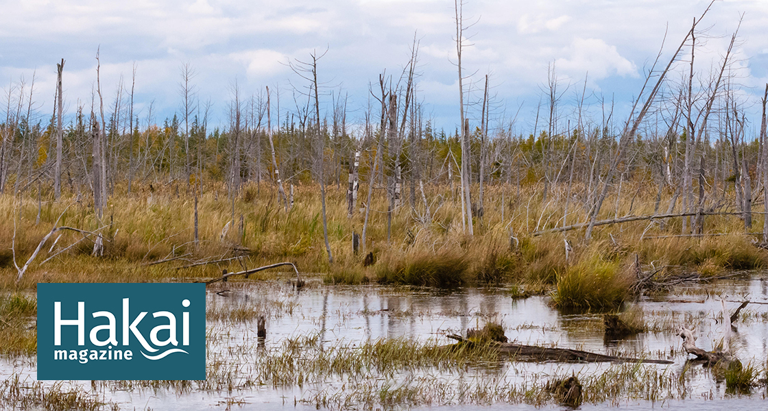 """""""Ghost Forests"""" Are, Surprisingly, a Sign of Resilience 