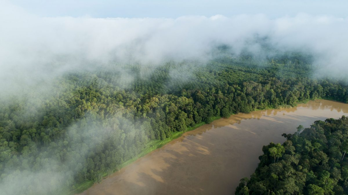 Lower Kinabatangan Wildlife Sanctuary and palm oil plantations