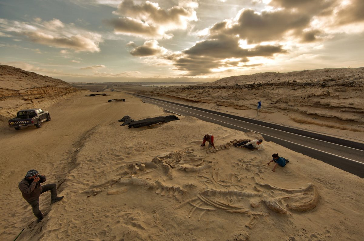 researchers digging up whale bones in the Atacana Desert in Chile
