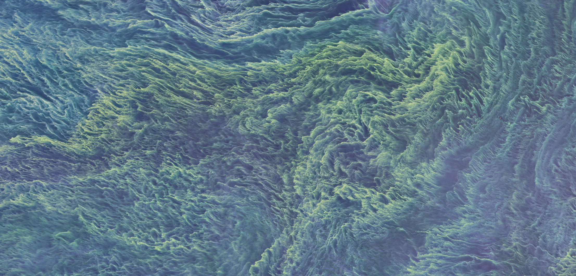 A false-color satellite image of a massive cyanobacteria bloom in the Baltic Sea, as seen by NASA's Landsat 8. Photo by NASA/Earth Observatory