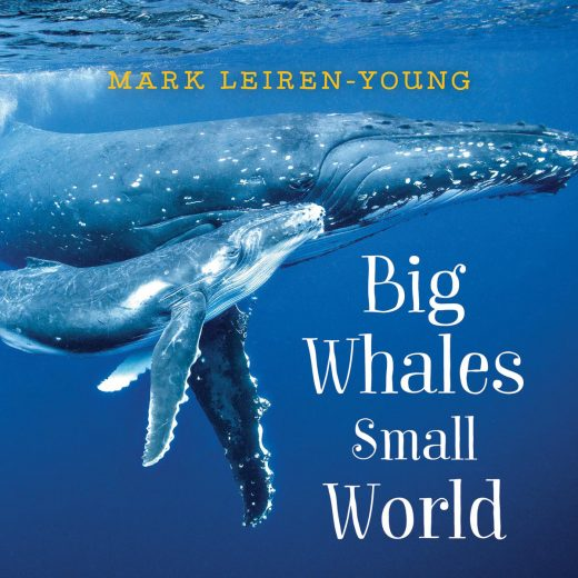 cover of Big Whales, Small World