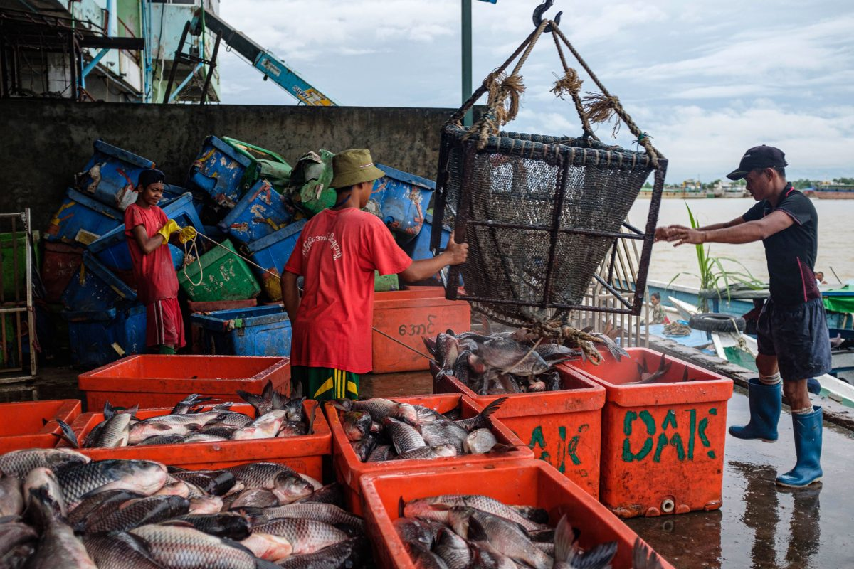 Workers unload fish as loaded boats arrive at the wholesale fish market