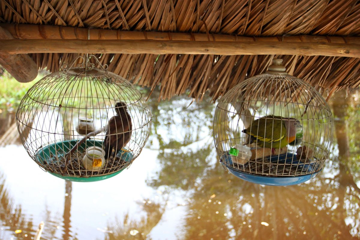 caged birds at Tám Hổ's home