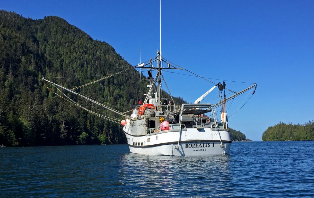Captained by Dave Boyes, the 17.5-meter Borealis I is used primarily to fish for halibut in the northeast Pacific. Photo by Larry Pynn