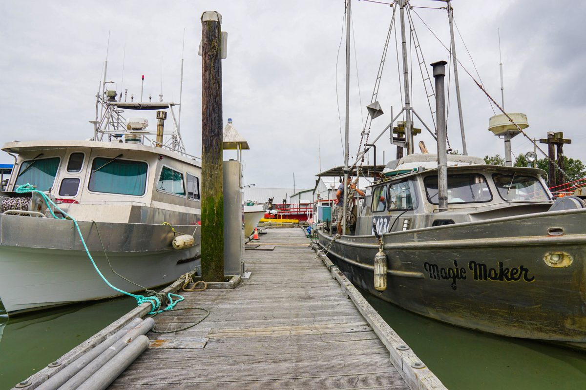 A painted boat and Satoshi's aluminum boat at the Steveston wharf. Photo by Braela Kwan