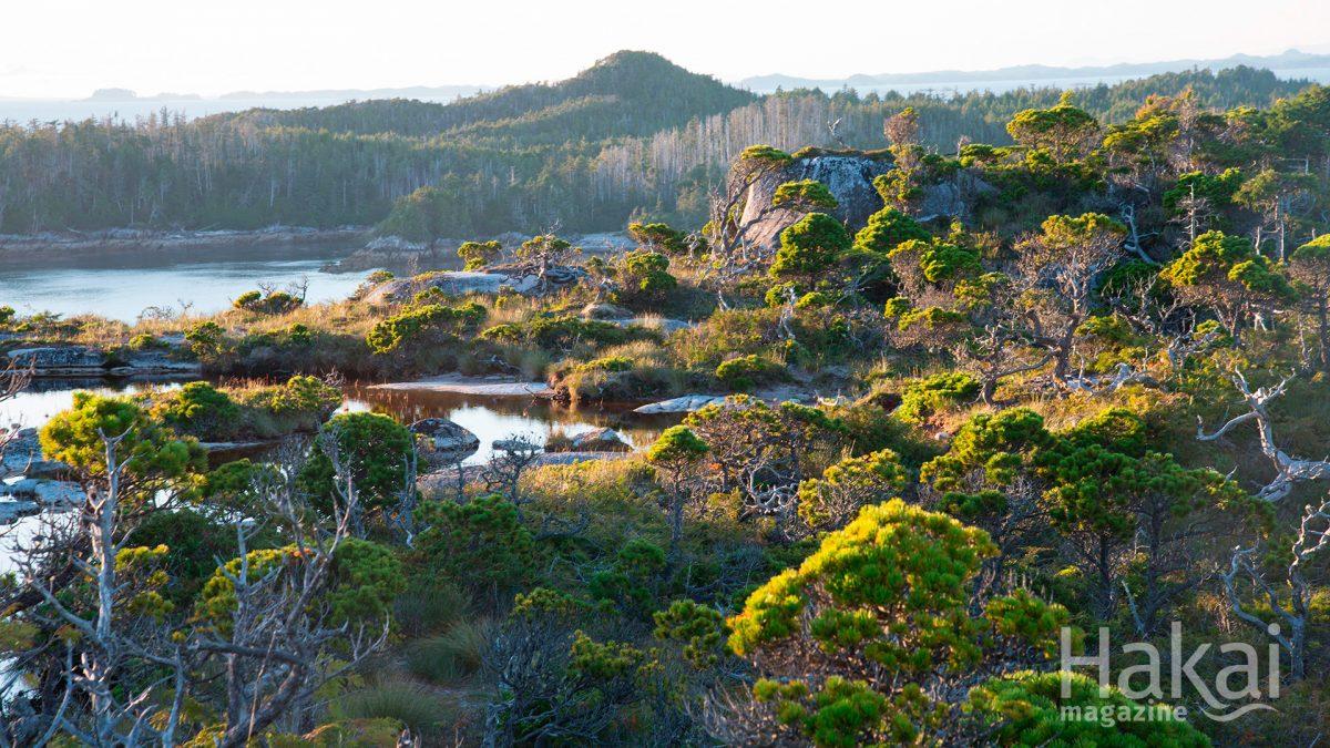 bog forest free zoom background