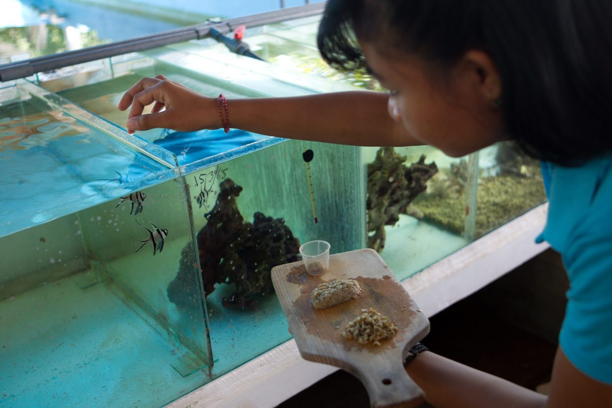 A worker feeds juvenile Banggai cardinalfish at an aquaculture training facility in Les. Photo by Shannon Switzer Swanson