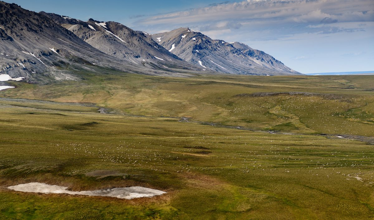 Caribou dot the landscape in the Tamayariak River drainage on Alaska's North Slope, near the base of the Sadlerochit Mountains in the Arctic National Wildlife Refuge.