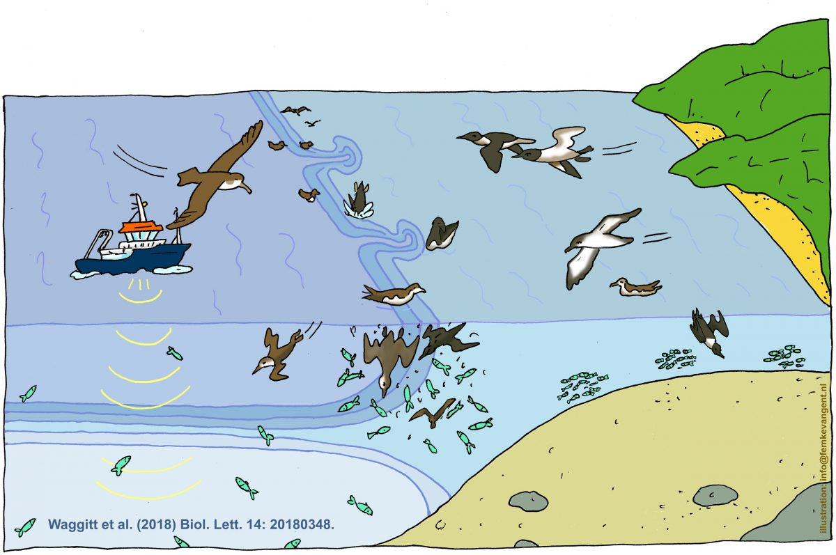 illustration showing seabirds fishing at the margin of stratified and unstratified water