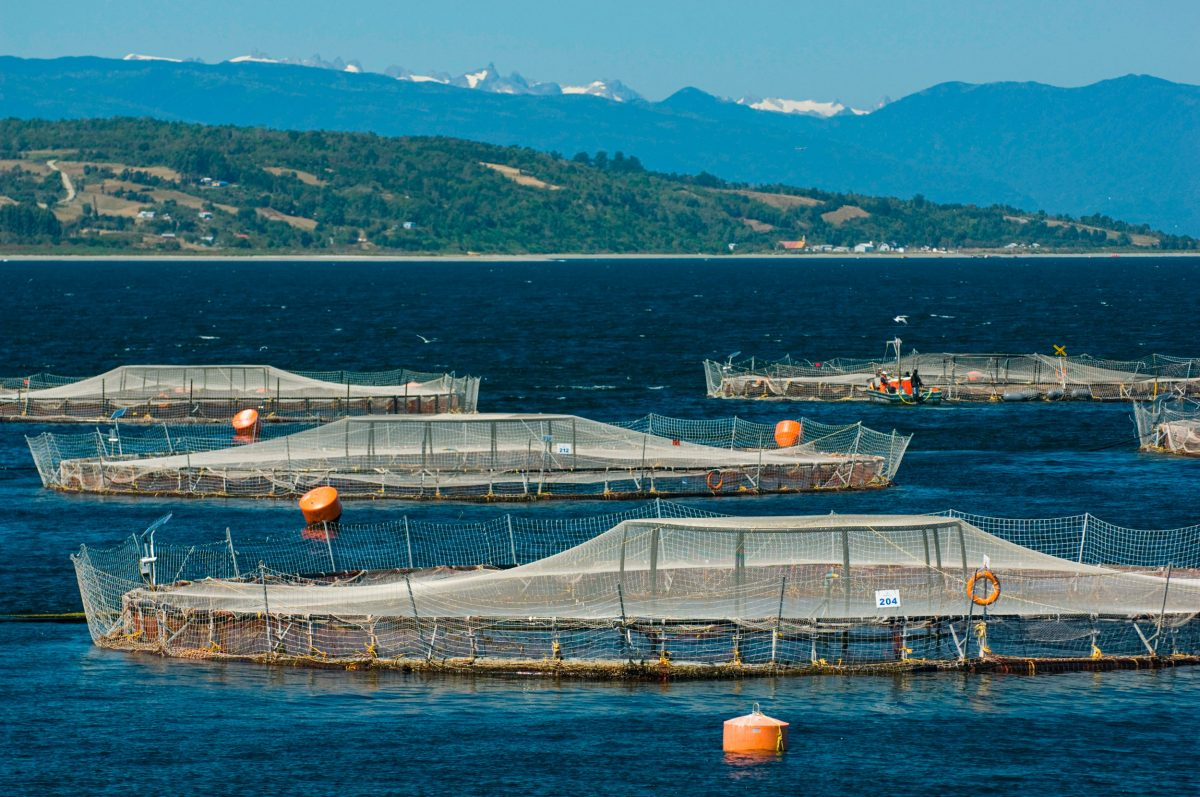 salmon farm, Chile