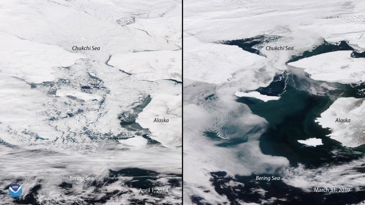 comparison of ice in the Bering Sea from 2014 and 2019