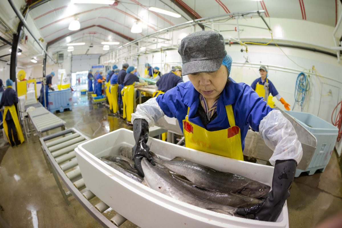 St. Jean's is a custom cannery, allowing recreational fishers to drop off their catch for processing. Here, fish are being packed and stored before processing.