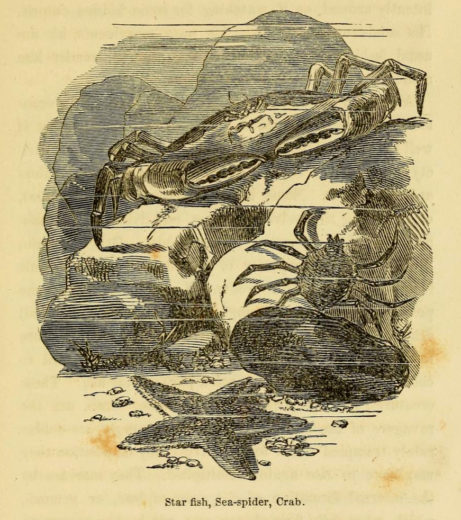 An illustration from Henry D. Butler's 1858 book, The Family Aquarium