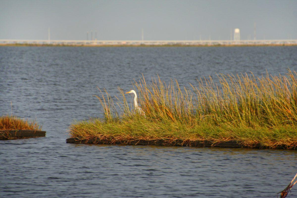 crane one artificial island