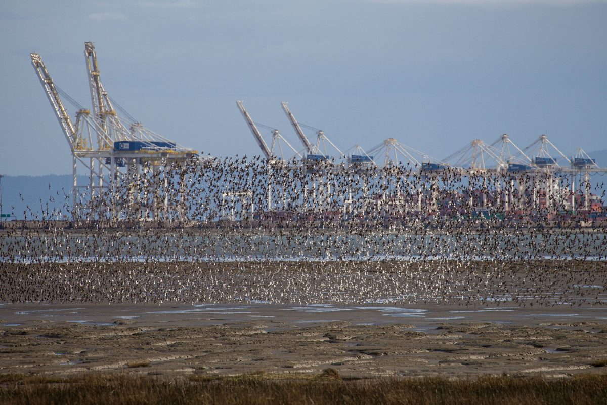 Roberts Bank and Deltaport terminal