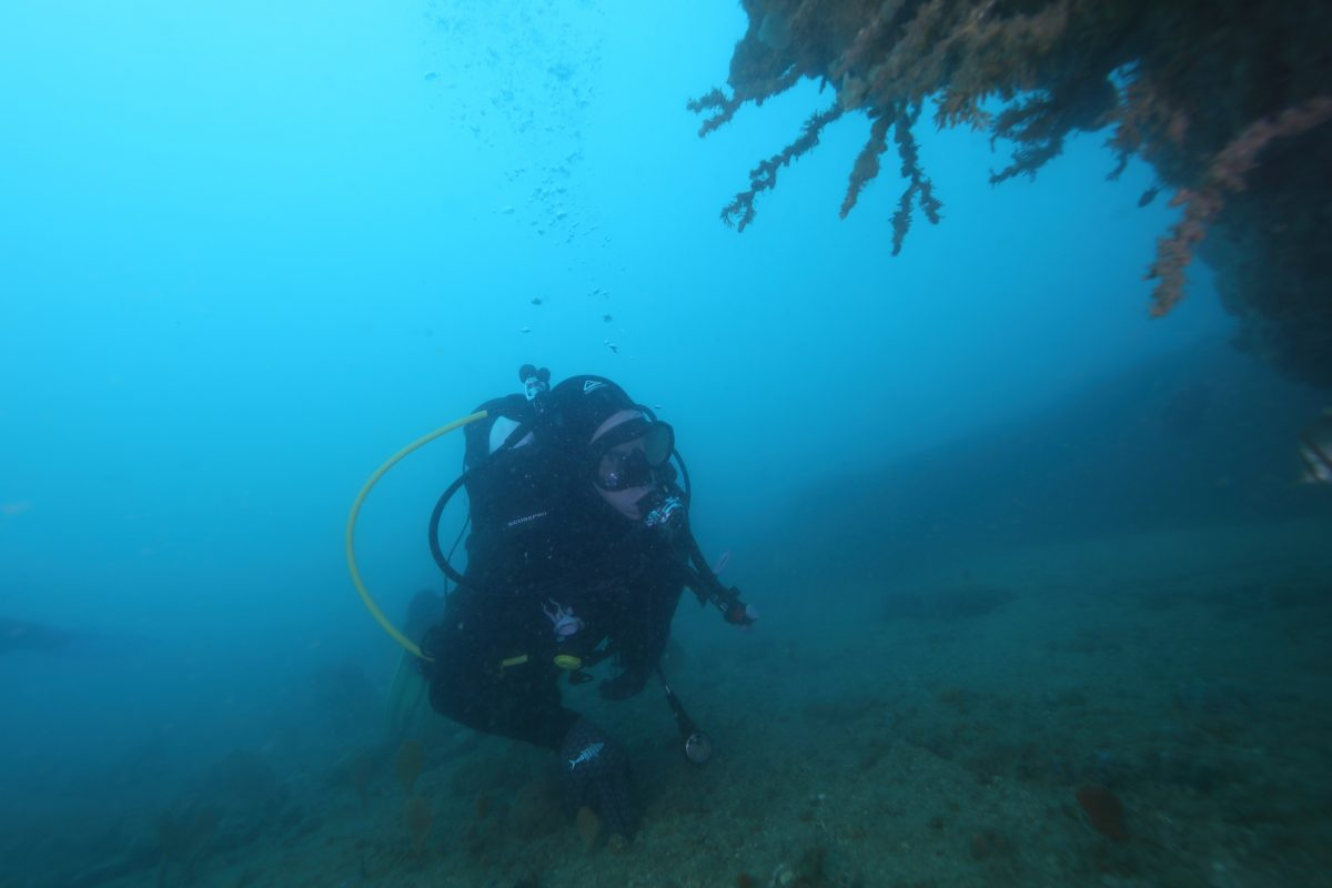 diver performing archaeological survey