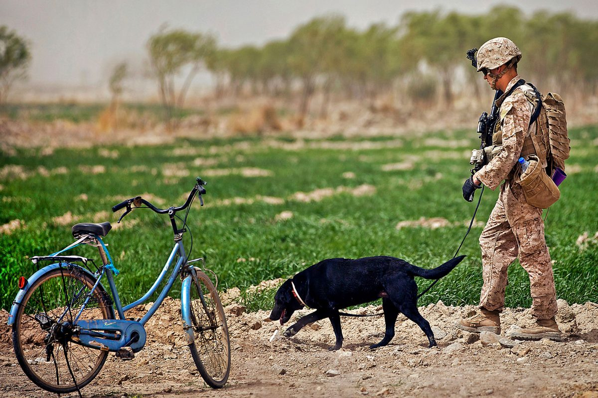US Marine with explosive detection dog in Afghanistan