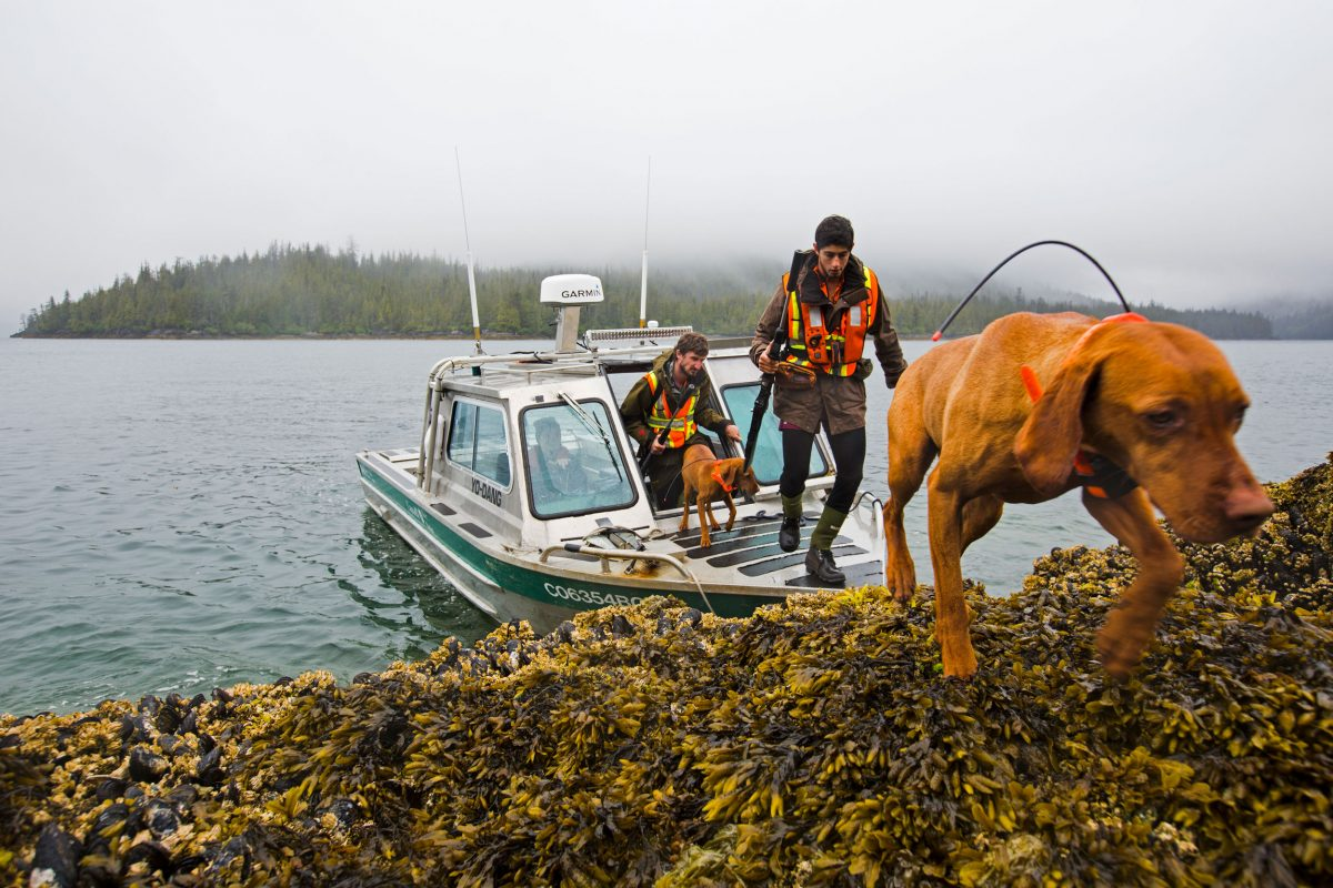 Hunters and dogs come ashore from a boat