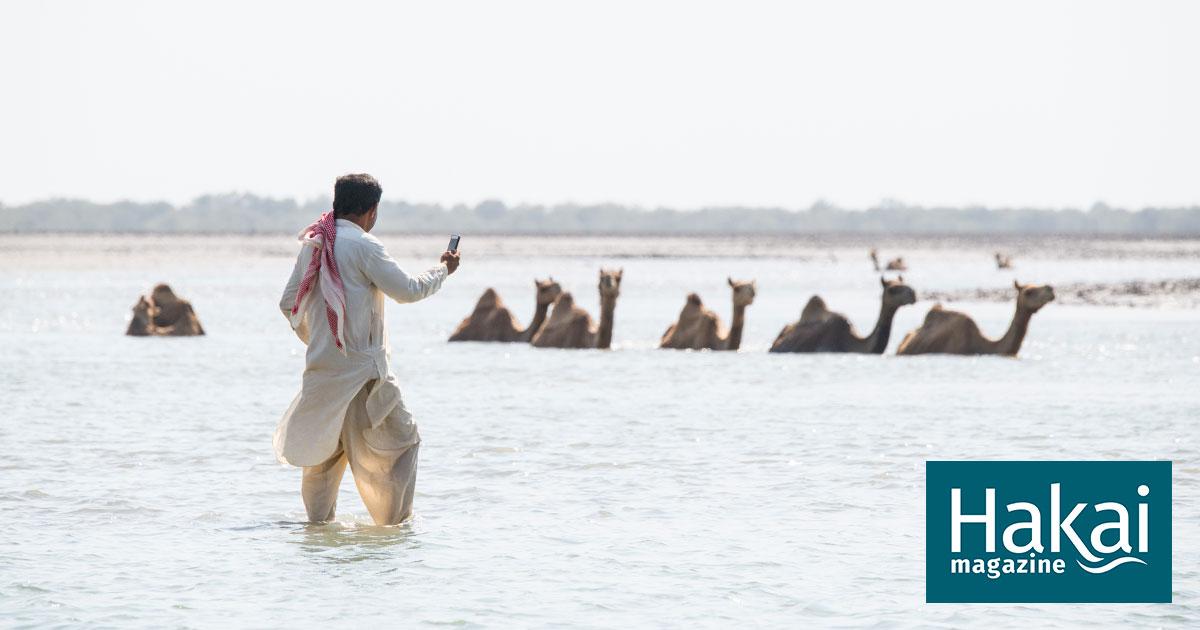 Gujarat Where Camels Take To The Sea thumbnail