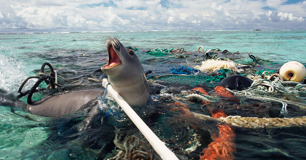 an analysis of the largest species of marine life in the worlds oceans How will ocean acidification impact marine and technology provides a holistic analysis of how species will be affected worldwide life cycle impact assessment.