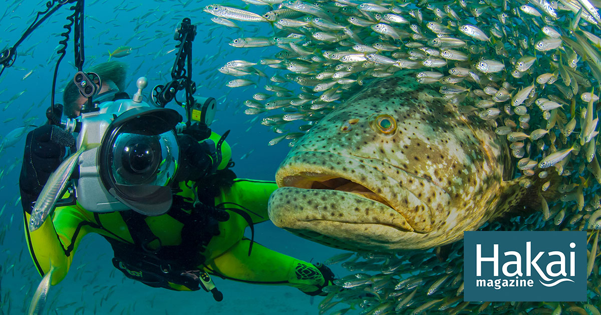Swimming with Super Grouper