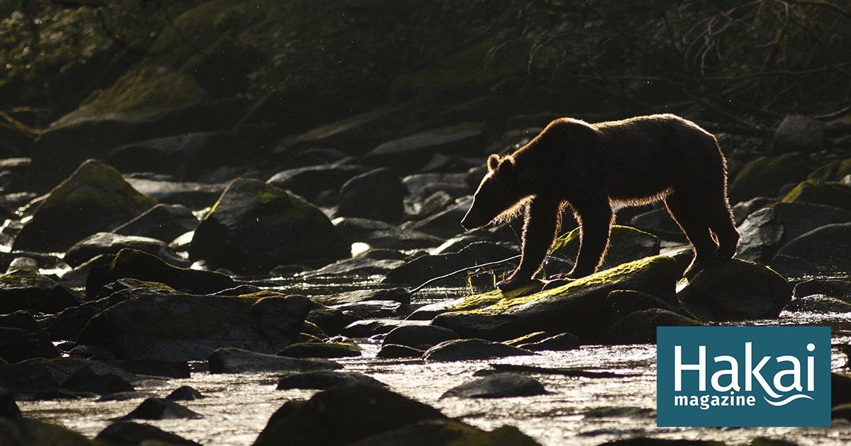 In The Kingdom Of The Bears Hakai Magazine