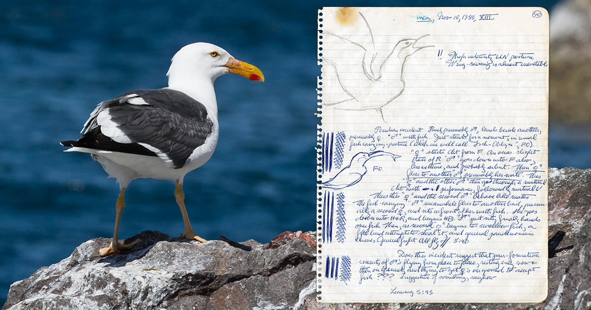 Consistently Lovely: the Exceptional Field Notes of Martin H. Moynihan | Hakai Magazine