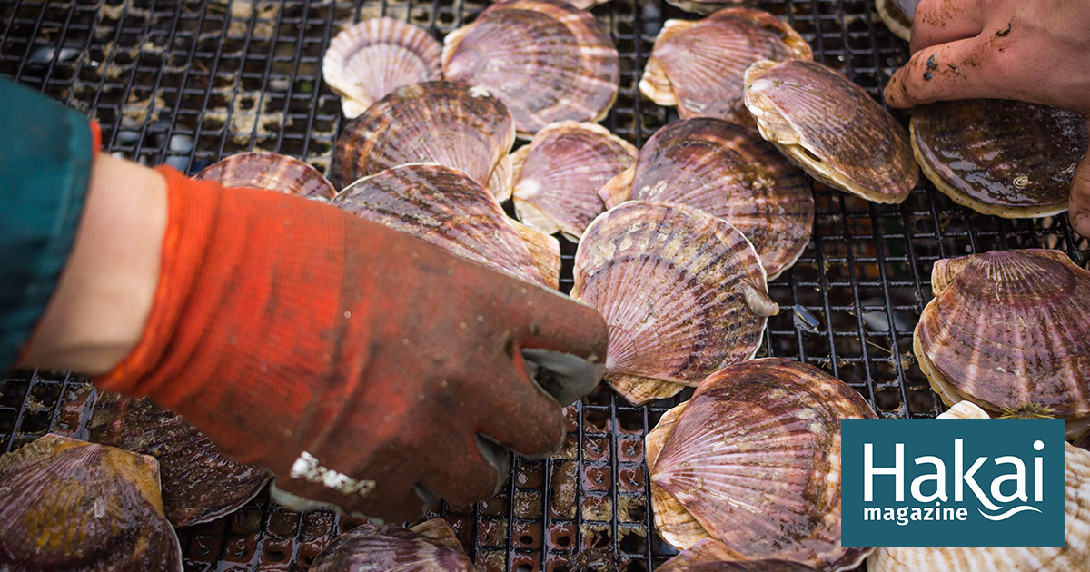 The Shellfish Gene | Hakai Magazine