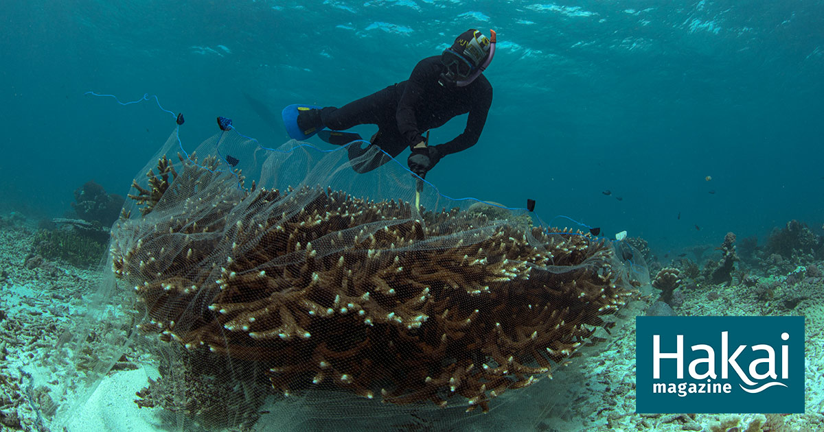 facebook sustainable aquarium fish.'