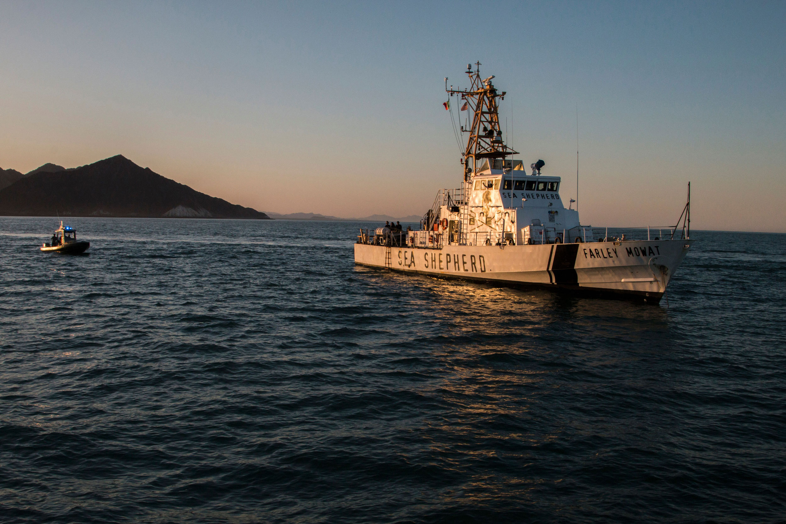 With approval from the Mexican government, the Sea Shepherd Conservation Society has been patrolling the Gulf of California since early 2015, monitoring totoaba poaching and later collecting illegal gill nets that can ensnare vaquitas and a variety of other wildlife. Photo by Hector Guerrero/AFP/Getty Images