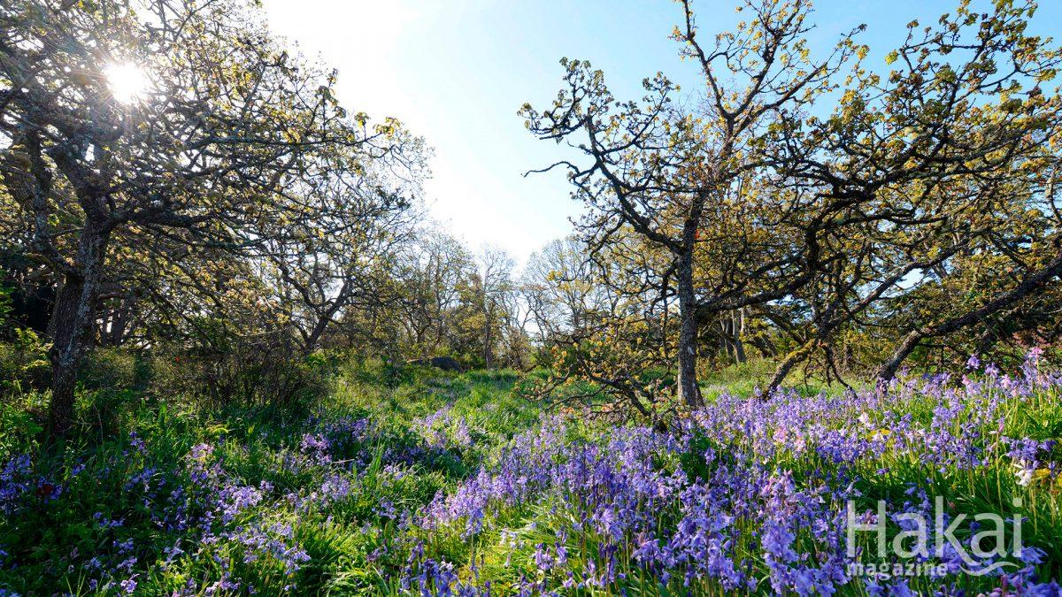 garry oak meadow free zoom background