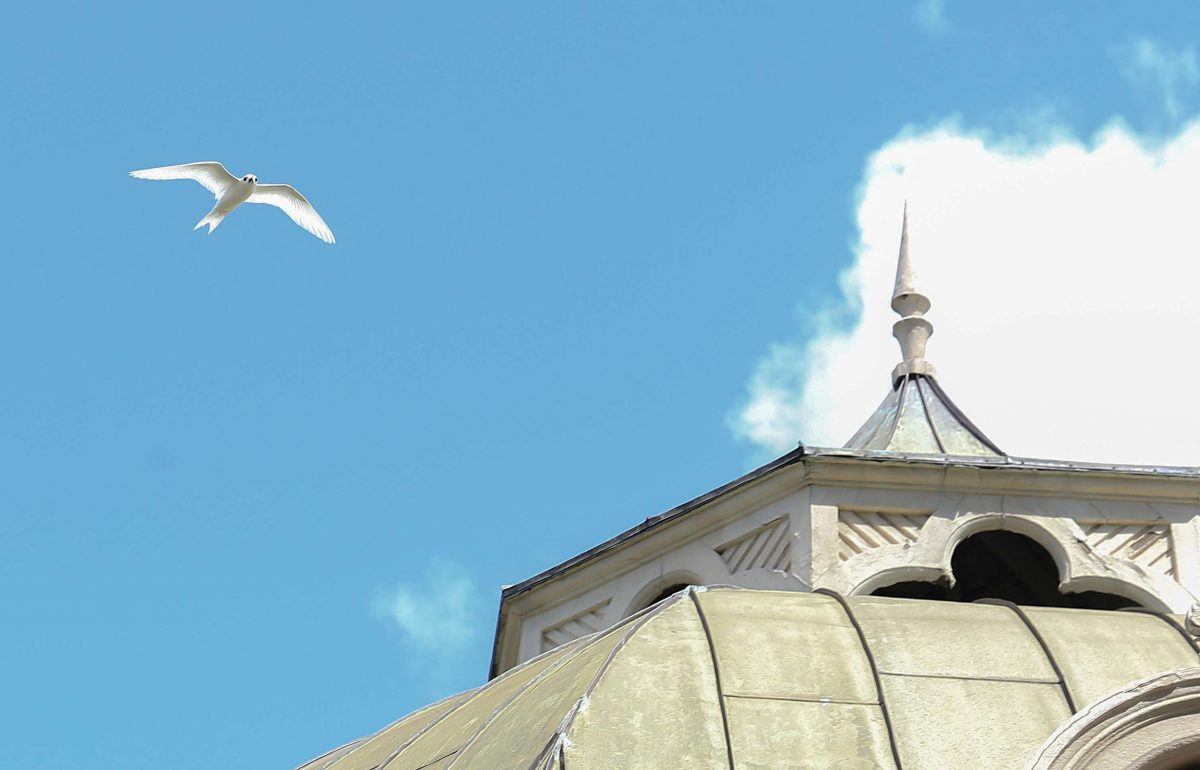 A white tern soars over a gazebo at the Iolani Palace in Honolulu, once the residence of the monarchy
