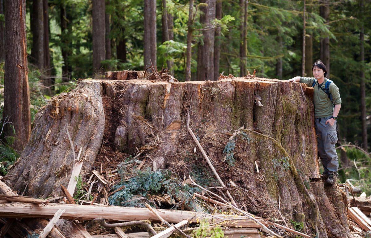tree stump in the Gordon River Valley