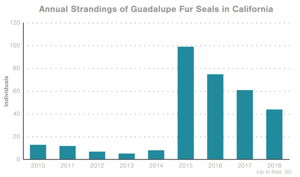 graph of Guadalupe fur seal strandings in California