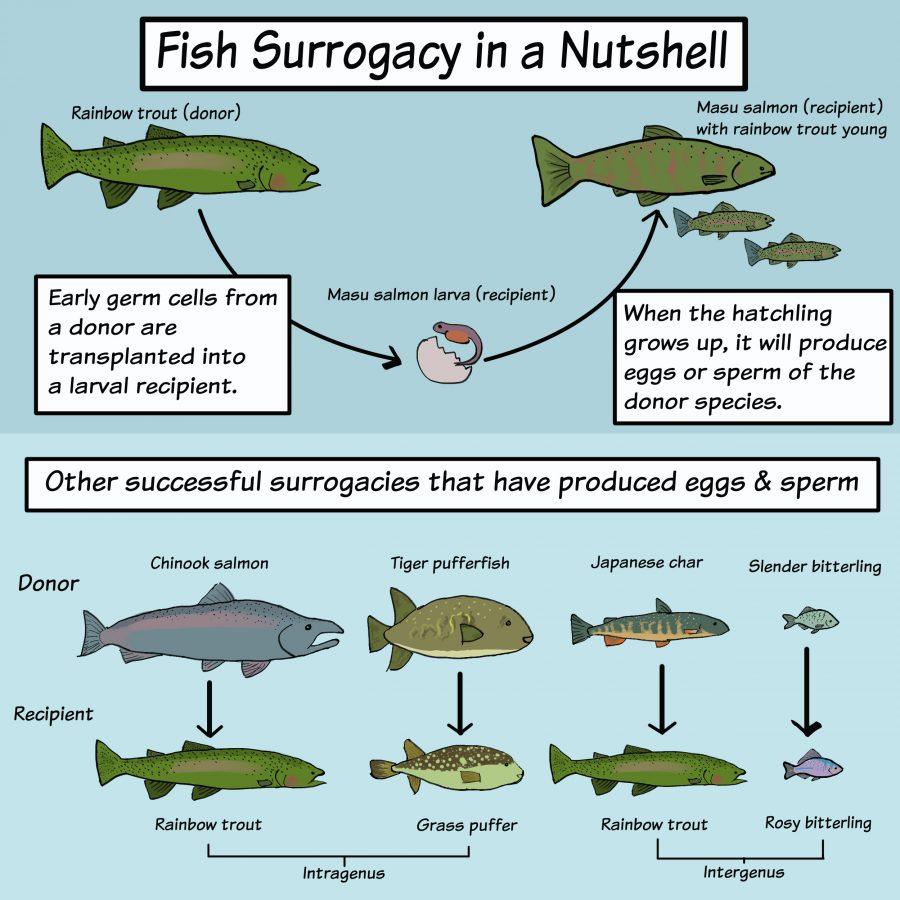graphic showing successful fish surrogacies